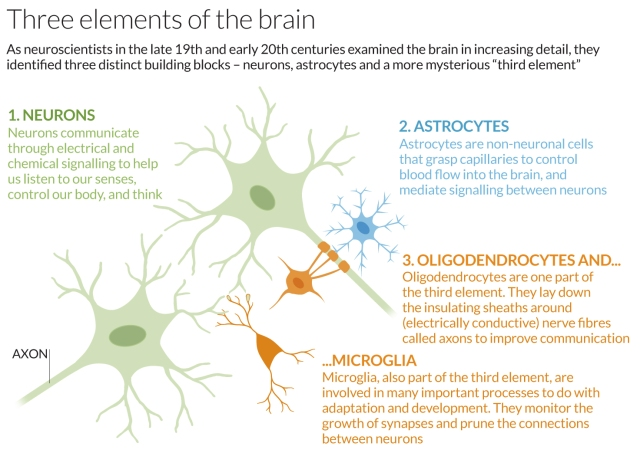 Three elements of the brain ( (C) New Scientist)